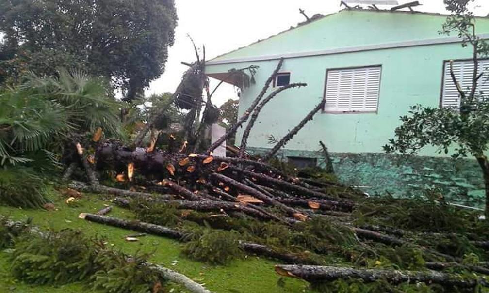 Vento forte também provocou queda de árvores em Vila Maria (Foto: Alexandre Miranda/Arquivo Pessoal)