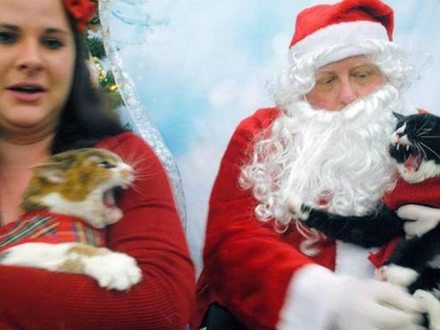 Papai Noel impediu briga de gatos durante foto e vira hit na web (Foto: Reprodução/Reddit/Annaswajid)