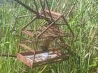 Homem é flagrado caçando pássaros silvestres em Mato Grosso do Sul