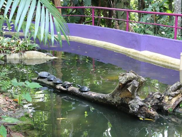 Durante a atividade, 20 tartarugas da Amazônia foram soltas neste sábado (8) (Foto: Tiago Melo/G1 AM)
