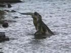 Veja crocodilo devorando rival menor e mais cenas chocantes entre animais