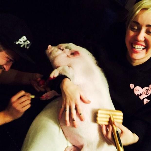 Miley Cyrus pinta unha do porco (Foto: Instagram / Reprodução)