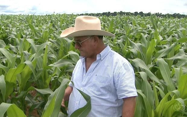 Produtores de outros setores, como a pecuária, estão investindo ainda mais no plantio do milho (Foto: Bom Dia Amazônia)