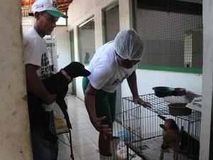 Associação de Proteção e Amor aos Animais (Apipa), recebe cães e gatos vítimas de maus tratos (Foto: Patrícia Andrade/G1)