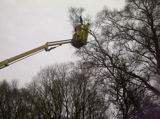 policial de Nova York (EUA) precisou ser resgatado pelos bombeiros depois que subiu em uma árvore para salvar um gatinho, mas depois não conseguiu descer (Foto: Foto Ilustrativa)