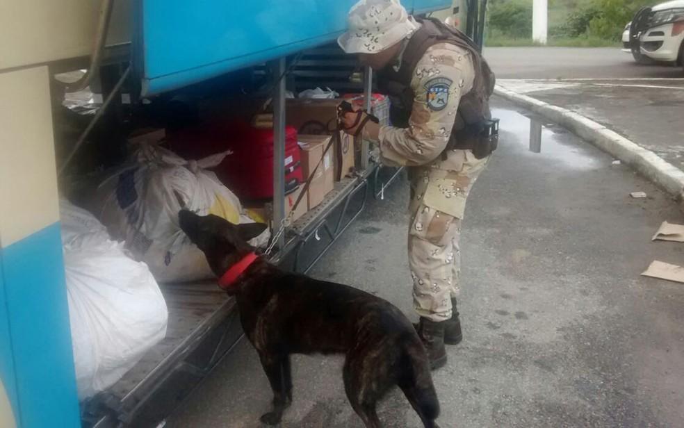 Droga foi encontrada com auxílio de animal, por policiais militares (Foto: Divulgação/ CIPE Cacaueira)