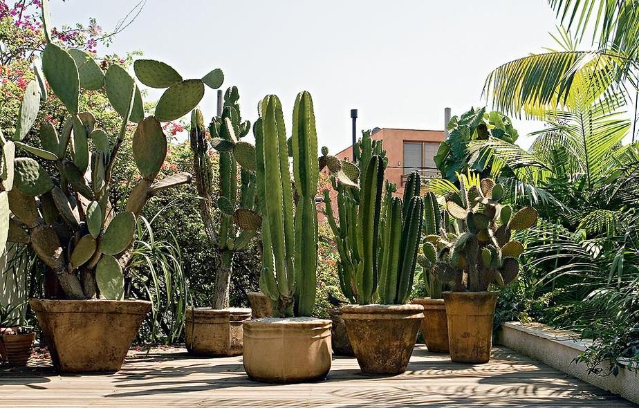 plantas para jardim muito sol:cactos são ideais para áreas externas eles gostam de muitas horas de