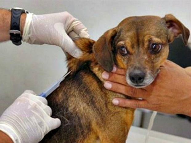 Cães e gatos recebem vacinação contra a raiva a partir deste sábado (Foto: Comdecom/Divulgação)