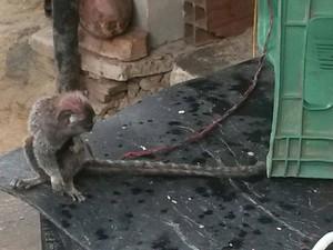Polícia resgatou animais na BR-324, em Candeias (Foto: Divulgação/ PRF)