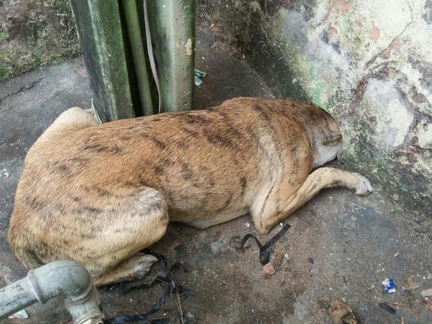 Bombeiros salvaram cachorro (Foto: Joãozinho/Rádio Tupã)