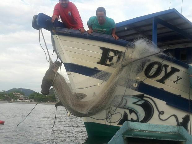 Tubarão martelo foi encontrado por pescadores nesta quarta-feira (22) (Foto: Reprodução/Facebook)
