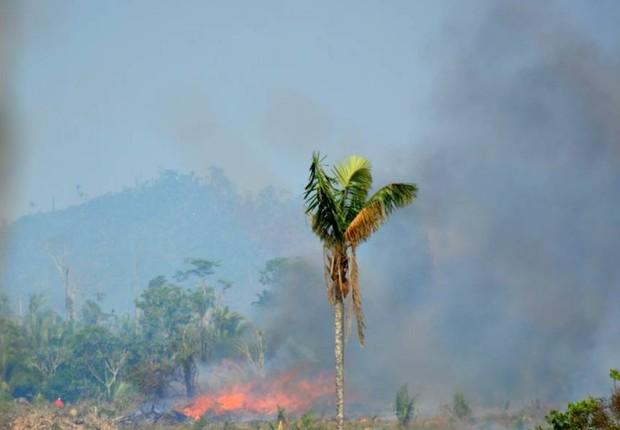 Queimada ilegal em propriedade próxima à Florestal Santa Maria. A região de Colniza é a que mais desmata no estado (Foto: Joaquim Leite)