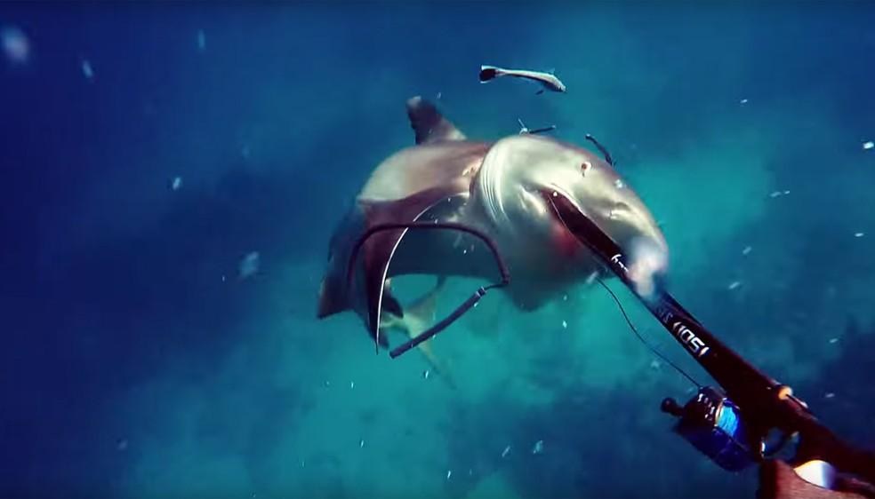 Espécie de tubarão é conhecida por ser mais agressiva (Foto: Liquid Vision/Reprodução/Youtube)