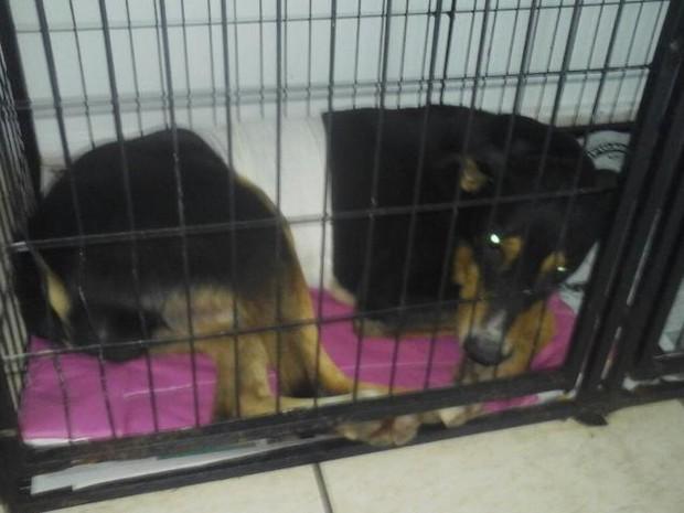 Cachorro quebrou costela e está em observação em cínica veterinária (Foto: Dário Miguel)