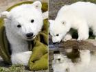 Urso Knut morreu por encefalite comum em humanos, dizem cientistas