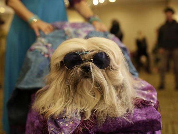 Cachorro participa de desfile de moda em Nova York (Foto: AFP PHOTO / JOSHUA LOTT)