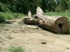 Acordo tenta acabar com extração ilegal de madeira em Anapu, no PA