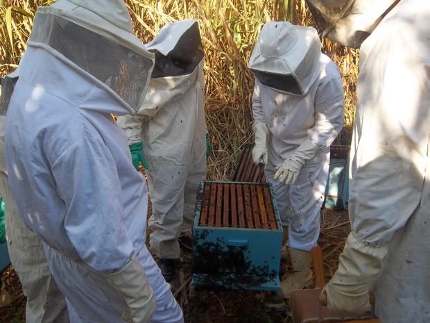 Participantes aprenderam técnicas de manejo de abelhas (Foto: Divulgação/Emater-Rio)