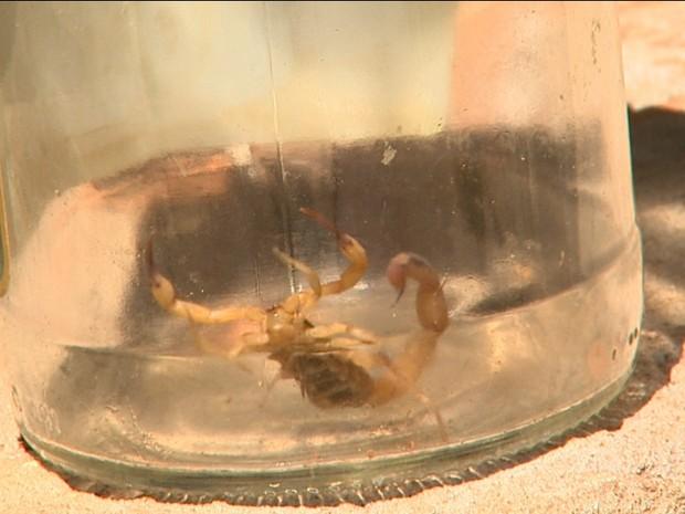 Picada de escorpião foi diagnosticada após passagem em duas unidades de saúde em Taquaritinga, SP (Foto: Reprodução/EPTV)