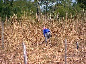 Estiagem começou há seis meses (Foto: Reprodução/TV Sergipe)
