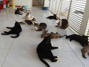 ONG Proteger está com 60 gatos (Foto: Divulgação/ONG Proteger)