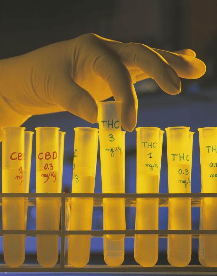 Legalize já? Pesquisador manipula tubos com compostos de maconha. Nos EUA, liberação fez cair consumo entre jovens (Foto: Mauro Fermariello/SPL/LatinStock)