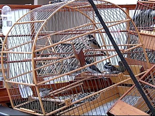 Pássaros Uberlândia (Foto: Reprodução/TV Integração)