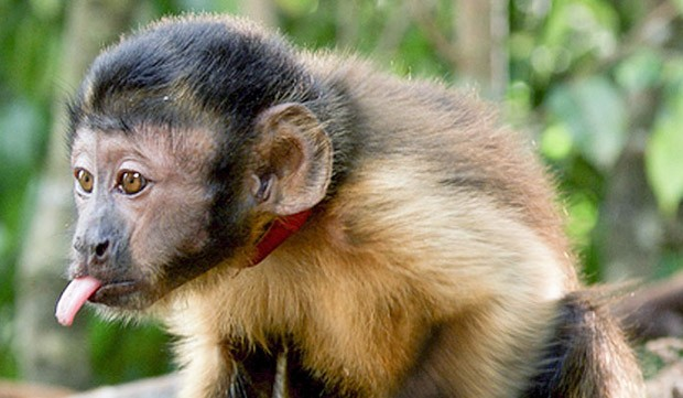Resumo da TV Paga - Edição do dia 15 de março/2015 Amazonia_planeta_verde