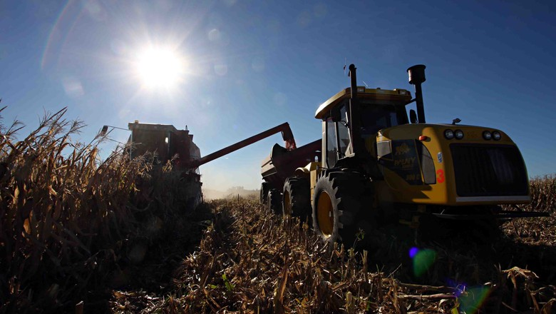 milho-graos-colheita (Foto: Editora Globo)