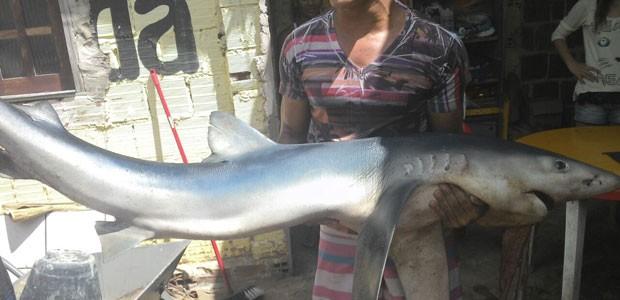 Tubarão capturado foi visto próximo à faixa de areia (Foto: Fernando Gondim Júnior/ Acervo pessoal)