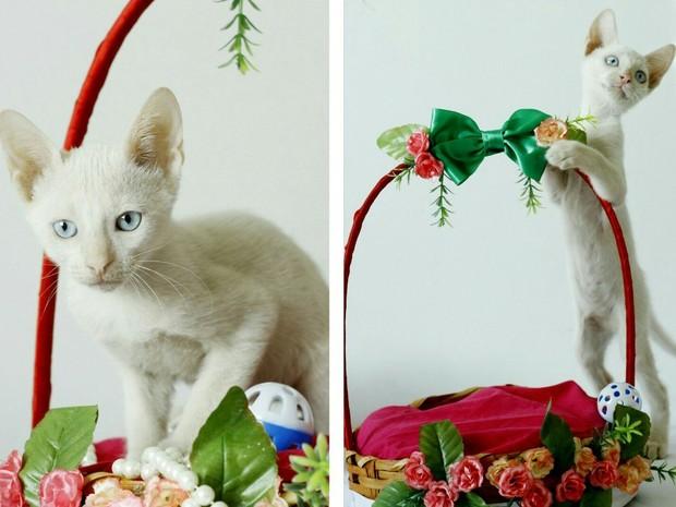 Cerca de 20 gatos estarão disponíveis para adoção (Foto: Divulgação/Ana Raquel)