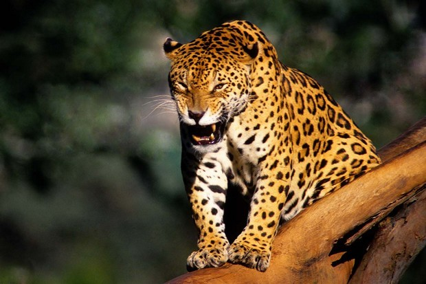 Público poderá conferir 100 imagens de animais e da natureza. (Foto: Emídio Bastos/Divulgação)