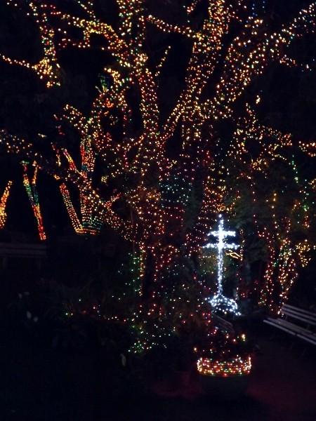 Dezenas de árvores foram enfeitadas com lâmpadas coloridas (Foto: Natália de Oliveira / G1)
