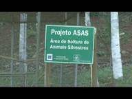 Projeto reintroduz aves silvestres em Ipaba, no Vale do Aço