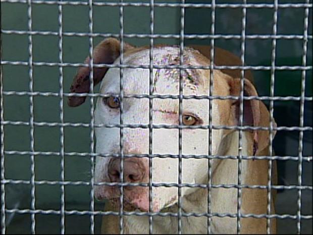 Cão ficou gravemente ferido na cabeça (Foto: Reprodução / TV Tem)