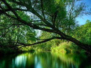 Papel De Parede Green Lake Download Techtudo