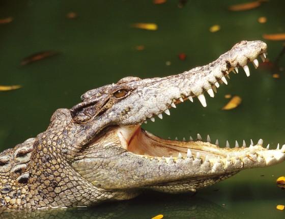 Crocodilo do Nilo (Foto: Thinkstock/Getty Images)