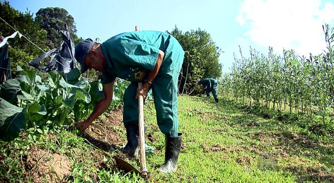 A horta da Associação do Cândido Ferreira ajuda no campo da saúde mental e também ambiental. (Foto: reprodução EPTV)