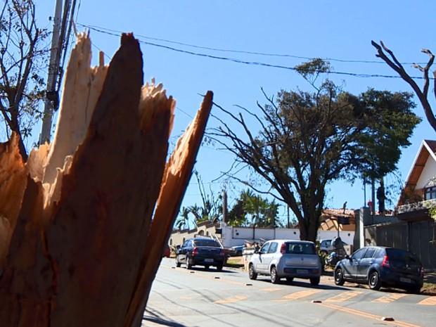 Árvore destruída na Avenida Padre Almeida Garret (Foto: Reprodução EPTV)