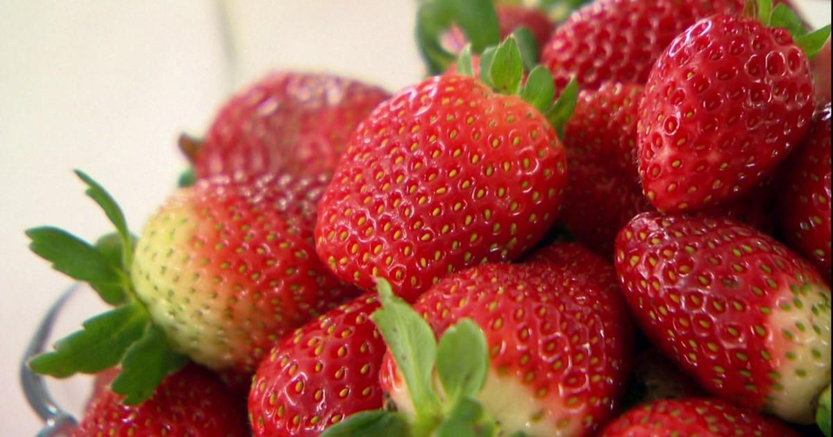 2db5797dc Globo Rural - Família produz morangos sem agrotóxicos e com selo verde no RS