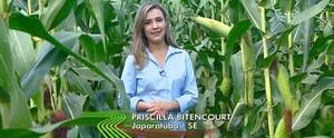 Produtores sergipanos de milho ganham renda extra com a produção de quitutes juninos (Divulgação / TV Sergipe)