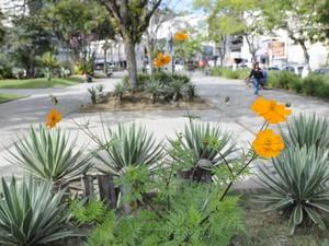 As vedélias dão um charme a mais para a Praça Dermeval Barbosa Moreira. (Foto: Daniel Marcus/Divulgação)