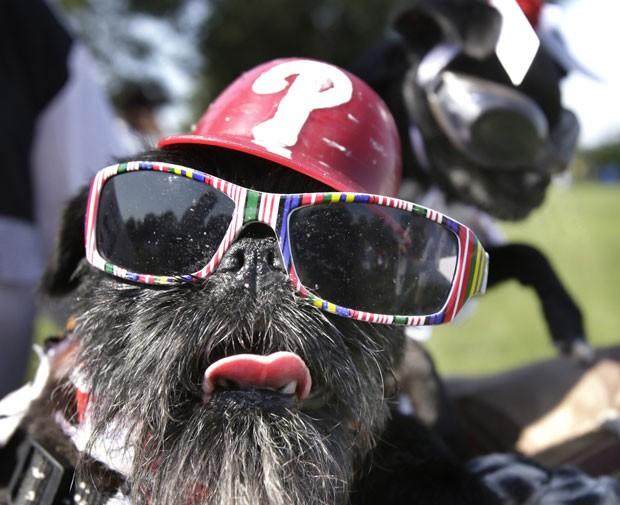 Cão fez sucesso ao usar óculos fashion (Foto: Elizabeth Robertson/The Philadelphia Inquirer/AP)