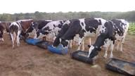 Criadores conseguem aumentar produção de leite na estiagem