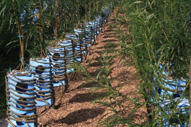 As peças são plantadas em uma fazendo em Derbyshire - um condado rural da Inglaterra (Foto: Divulgação)