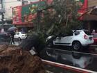 Árvore é derrubada pela chuva e cai sobre carro em Teresópolis, no RJ