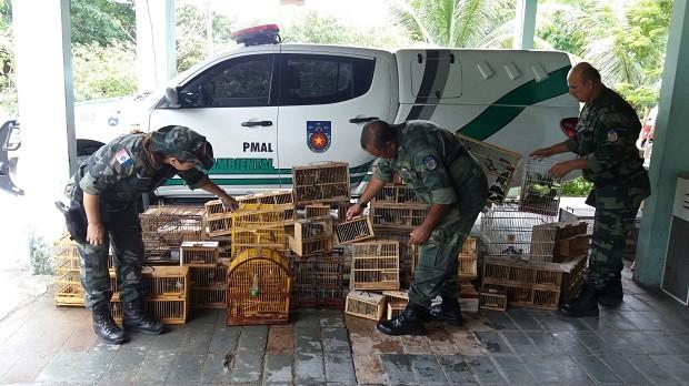 Polícia Militar apreende 221 pássaros em Arapiraca (Foto: Divulgação/BPA)