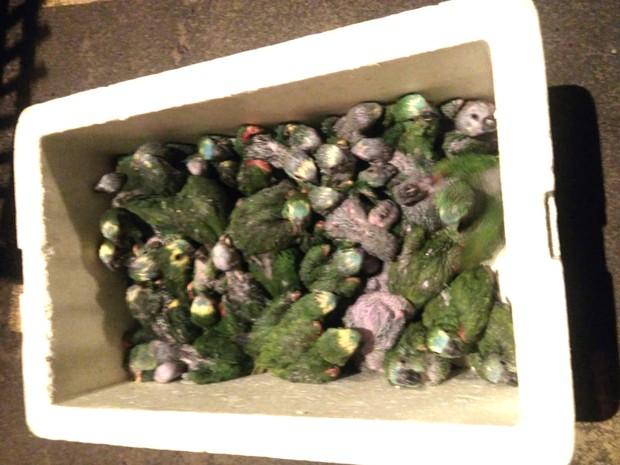 Foram apreendidos 93 filhotes de papagaio e 8 canários (Foto: Polícia Rodoviária de Araraquara)