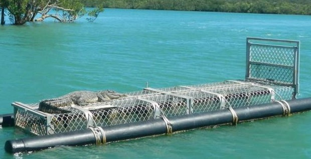 'Crocodilo malandro' descansou em cima de armadilha na Austrália (Foto: Reprodução/Facebook/Northern Territory Police Force)