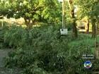 Chuva com ventos fortes derruba árvores em bairros de Rio Preto